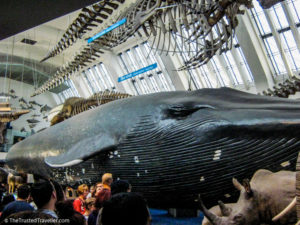 The Natural History Museum - London: 60 Things to See & Do - The Trusted Traveller