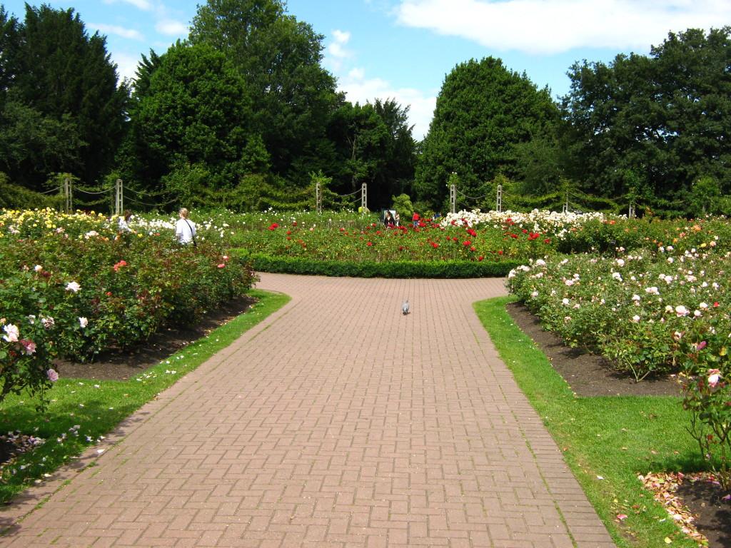 Rose Gardens in Regent's Park