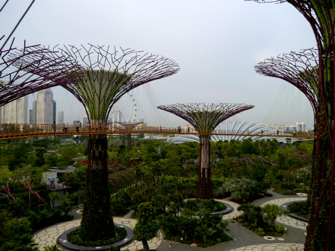 Supertrees, Gardens by the Bay - Things to Do in Singapore - The Trusted Traveller