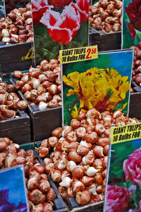 Bulbs for sale at the Singel Floating Flower Market - Things to Do in Amsterdam - The Trusted Traveller
