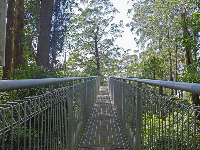 First steps on the walkway- Visiting the Illawarra Fly Treetop Walk - The Trusted Traveller