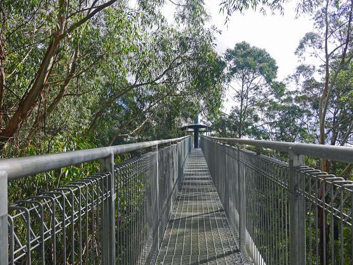 Heading out onto the first cantilever - Visiting the Illawarra Fly Treetop Walk - The Trusted Traveller