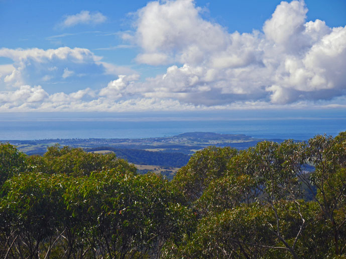 Looking over the treetops to the ocean - Visiting the Illawarra Fly Treetop Walk - The Trusted Traveller