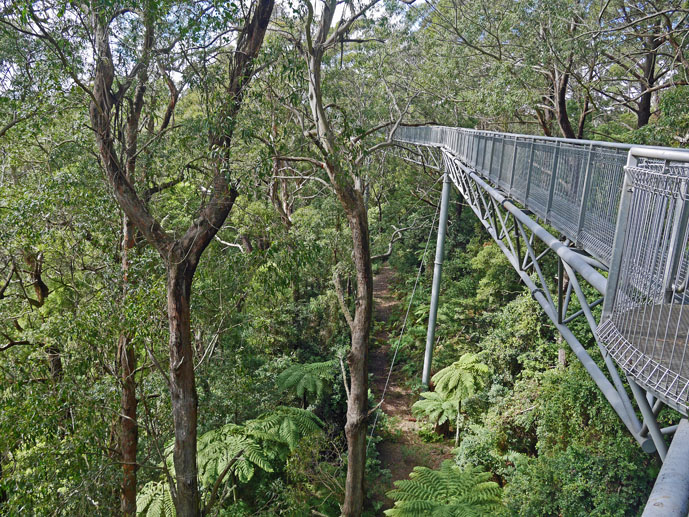 The steel walkway - Visiting the Illawarra Fly Treetop Walk - The Trusted Traveller