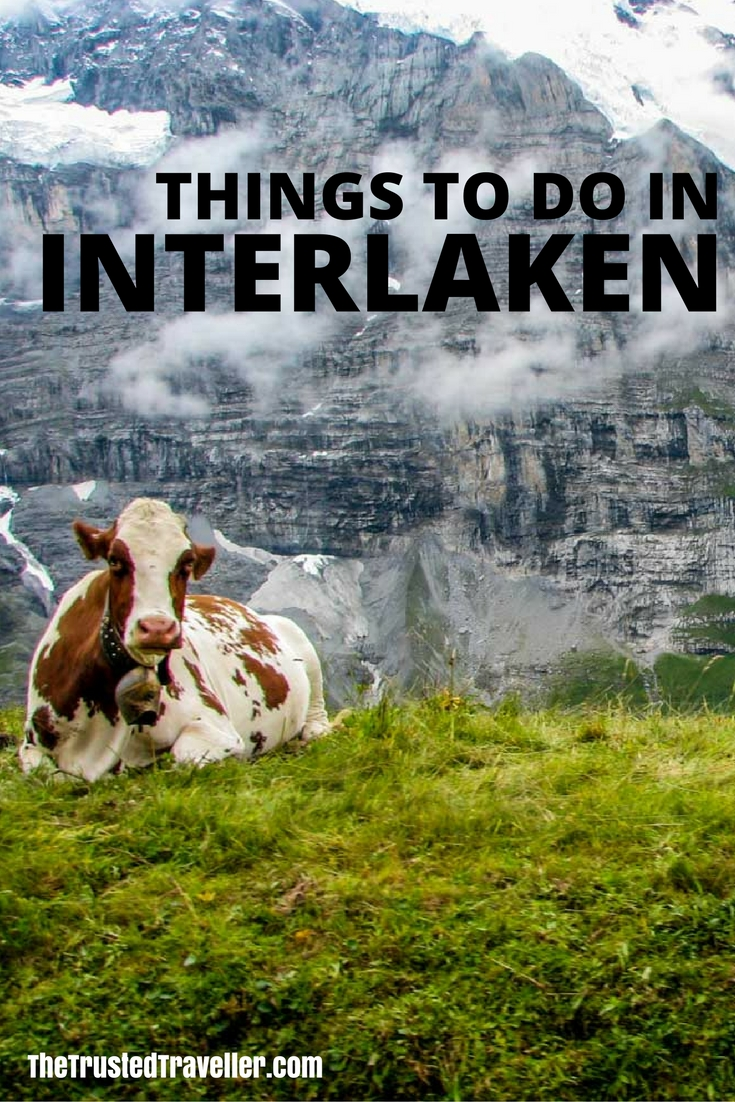 A mountain cow sits on a hill on the way up to Jungrau from Interlaken, Switzerland - Things to Do in Interlaken - The Trusted Traveller