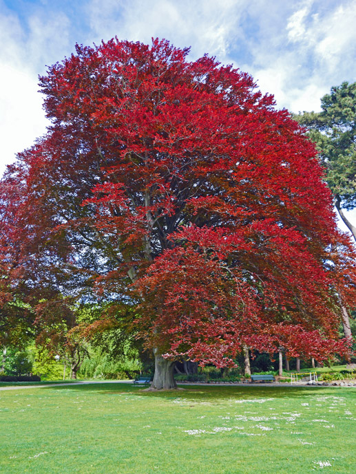 Spring Time in Christchurch Botanic Gardens - The Trusted Traveller