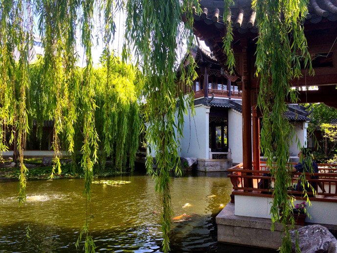 Finding Peace in Sydney's Chinese Garden of Friendship - The Trusted Traveller