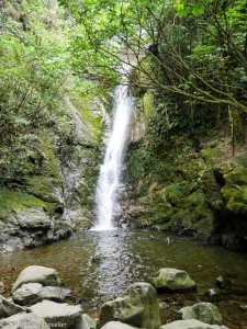 The Ohau Stream Waterfall with seal pups playing in the water below - Driving from Christchurch to Marlborough - The Trusted Traveller