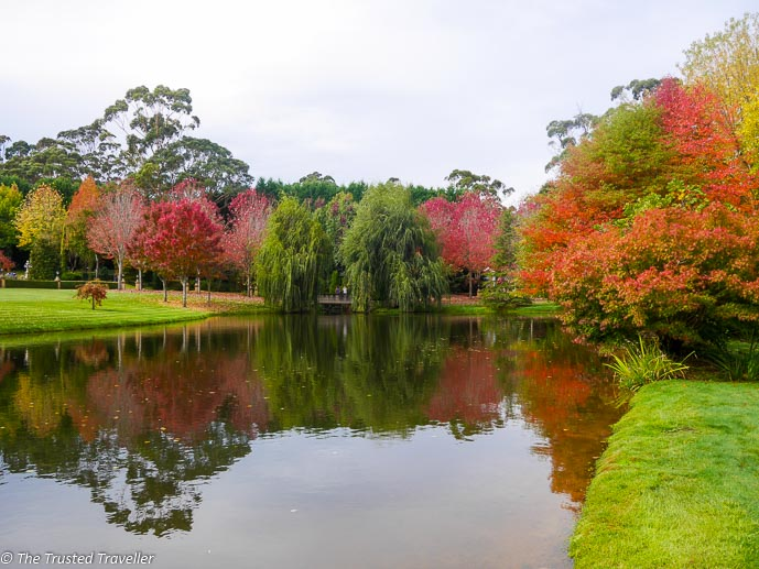 The spectacular autumn colour on display at 'Bellagio' - Things to Do in The Southern Highlands - The Trusted Traveller
