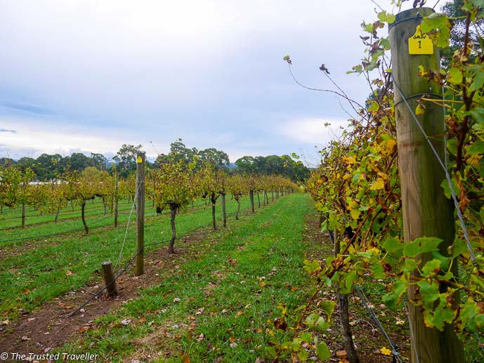 Joadja Vineyard - Things to Do in The Southern Highlands - The Trusted Traveller