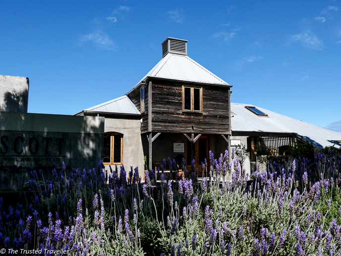 The beautiful lavendar entrance at Allan Scott Family Winemakers - Sipping Sav: A Tour of The Marlborough Wine Region - The Trusted Traveller