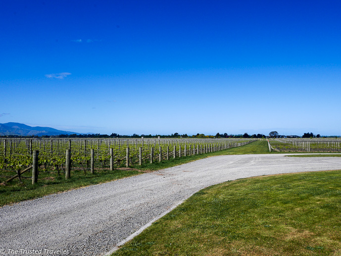 Vineyards as far as the eye can see - Sipping Sav: A Tour of The Marlborough Wine Region - The Trusted Traveller
