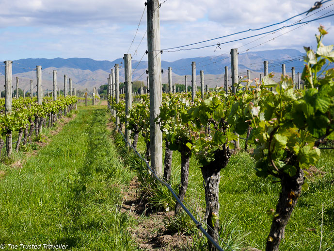 Things to Do in Marlborough - The Trusted Traveller