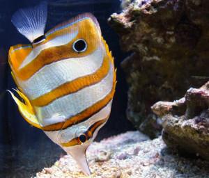 Tropical fish in the Sydney Aquarium