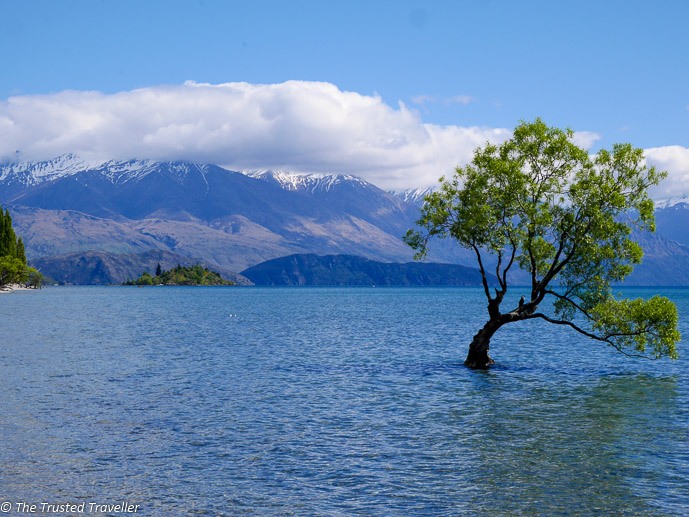 The Wanaka Tree in Lake Wanaka - The 10 Most Stunning Lakes on New Zealand's South Island - The Trusted Traveller