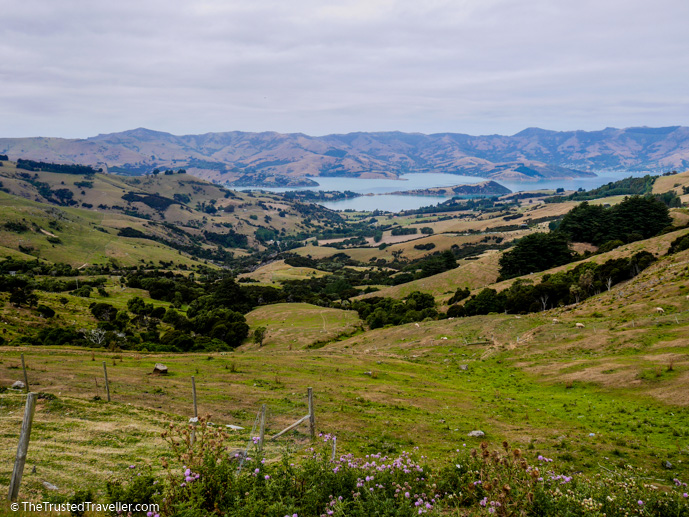 The view from Hilltop looking down over Akaroa Harbour - What to See on a Day Trip to Akaroa from Christchurch - The Trusted Traveller