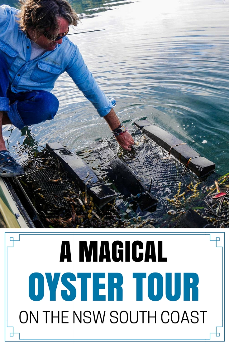 Sponge pulling an oyster bag from the water - A Magical Oyster Tour on the NSW South Coast - The Trusted Traveller