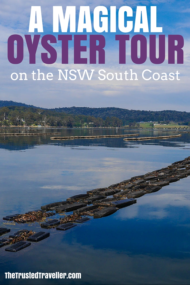 Oyster leases in the Pambula Lake - A Magical Oyster Tour on the NSW South Coast - The Trusted Traveller