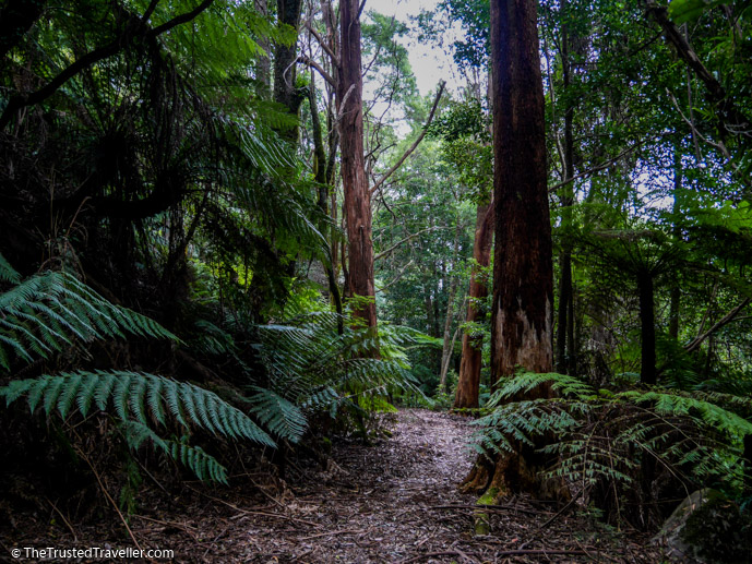 Walking through the rainforest to the top of Mt Dromedary - Things to Do in Eurobodalla on the NSW South Coast - The Trusted Traveller