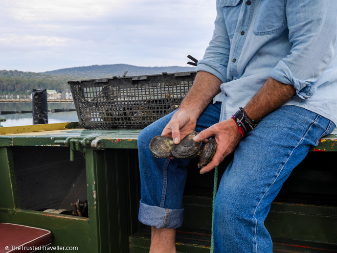 Angasi oysters - A Magical Oyster Tour on the NSW South Coast - The Trusted Traveller