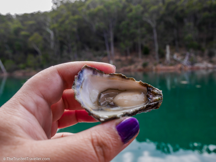 A sweet and fresh Sydney Rock Oyster - A Magical Oyster Tour on the NSW South Coast - The Trusted Traveller