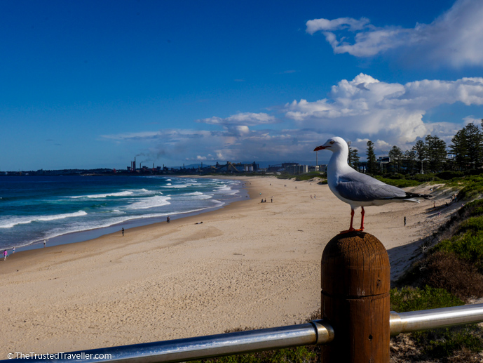 City Beach, Wollongong - The 16 Best NSW South Coast Beaches - The Trusted Traveller