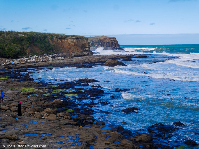 Curio Bay Fossil Forest - 7 Easy Walks in The Catlins, New Zealand - The Trusted Traveller