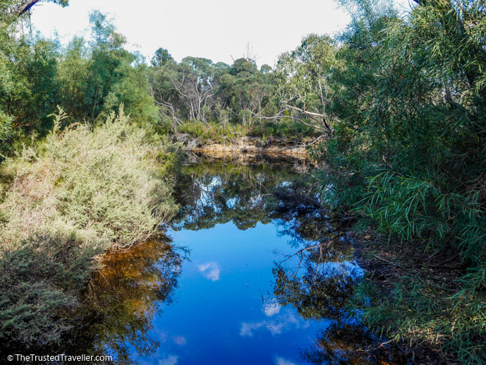 The waterhole where you might see Platypus - What to See & Do in Flinders Chase National Park, Kangaroo Island - The Trusted Traveller