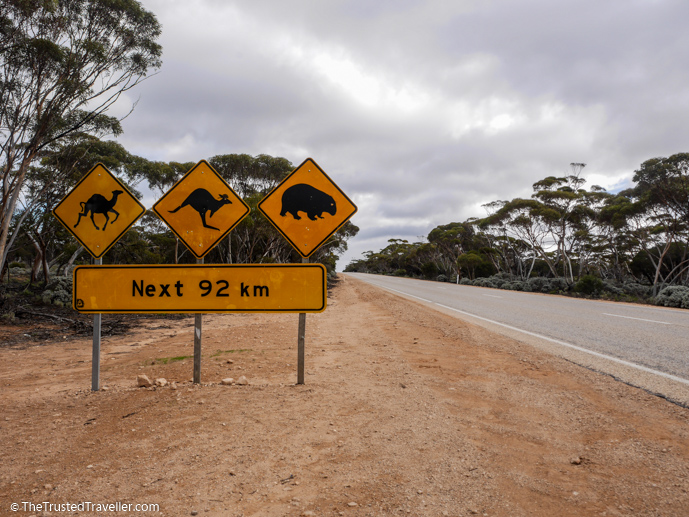 Typical wildlife signs in Australia - The Complete Guide to Getting Around Australia - The Trusted Traveller
