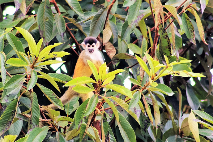 Monkeys - My 10 Favorite Things About Costa Rica -The Trusted Traveller
