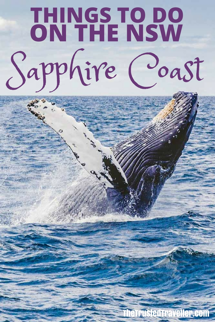 Don't miss the chance to see humpback whales in the wild when visiting the Sapphire Coast from September to November each year. Click through to read about some of the other things to do on the NSW Sapphire Coast - The Trusted Traveller