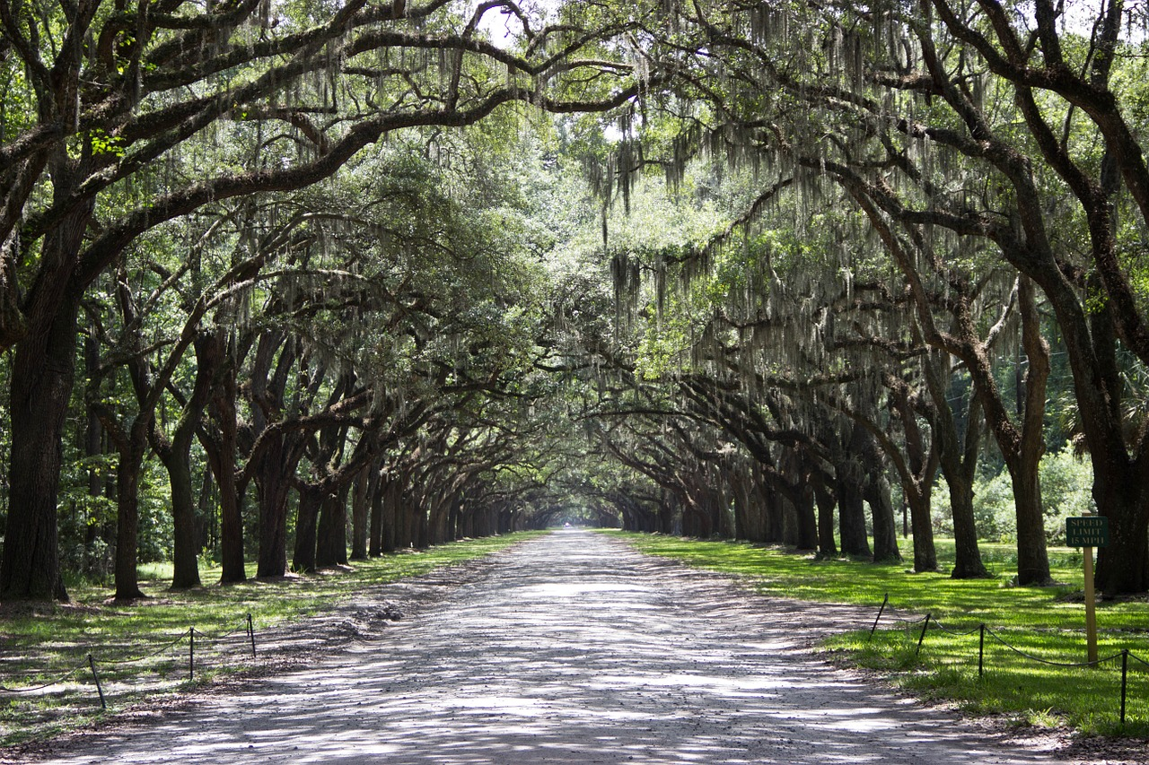 Oak and Moss lined road in Savannah - The 7 USA Cities on Top of My Bucket List - The Trusted Traveller