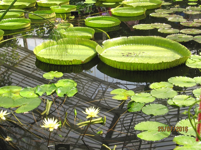 Cambridge Botanic Gardens - Things to Do in Cambridge, England - The Trusted Traveller
