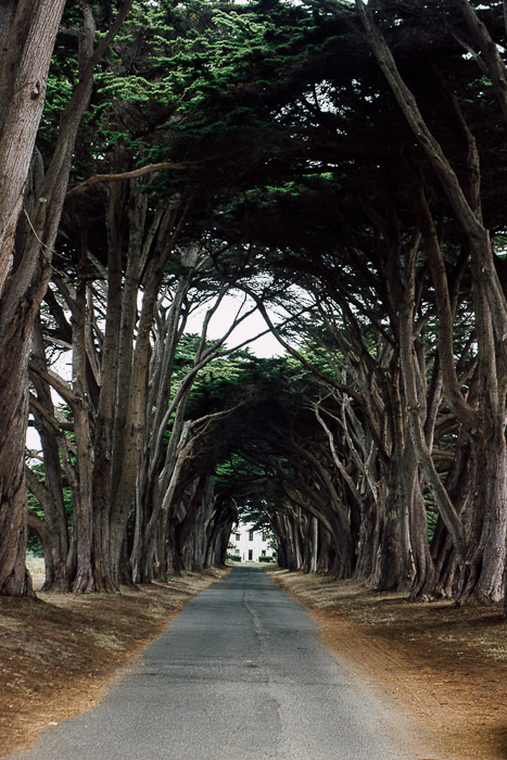 Pt Reyes Cypress tunnel - Exploring the Charm of Small Californian Towns - The Trusted Traveller