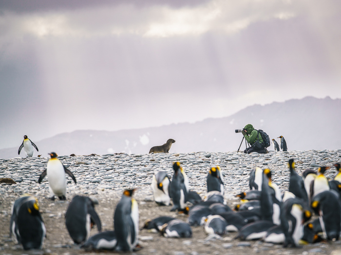 South Georgia, Salisbury Plain - 15 Stunning Photos for Those Curious About Antarctic Cruises - The Trusted Traveller
