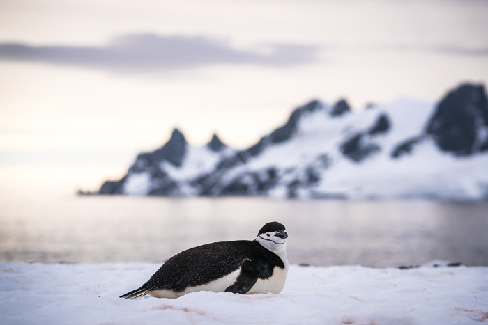Antarctic Peninsula, Half Moon Island - 15 Stunning Photos for Those Curious About Antarctic Cruises - The Trusted Traveller