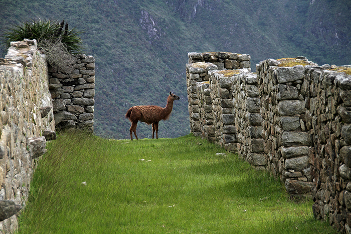 Sacred Valley - The Best of Peru Itinerary: (up to) One Month - The Trusted Traveller
