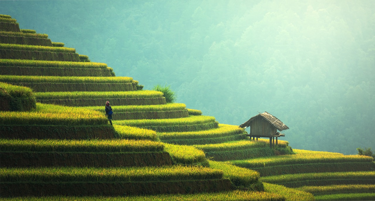 A Beginner's Guide to Bali - The Trusted Traveller
