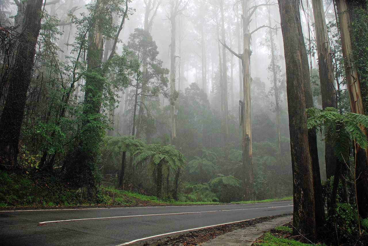 9 Best Day Trips from Melbourne - The Trusted Traveller